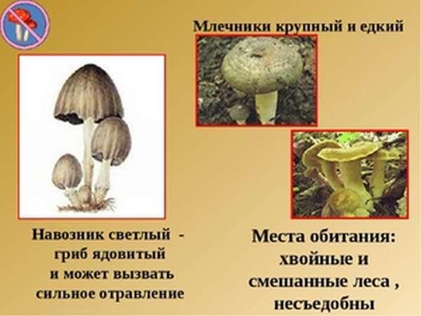 Методика использования гриба навозника