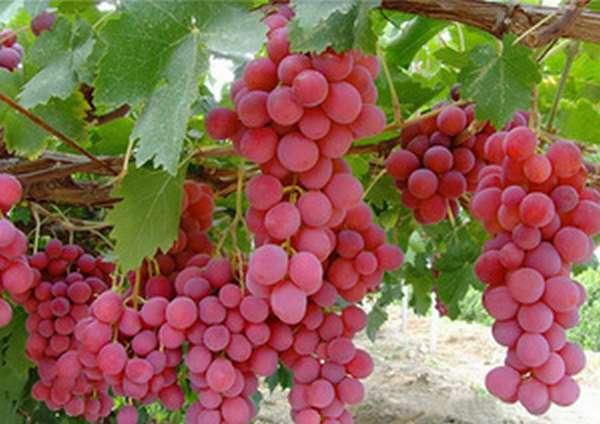 Определение названия красного вина