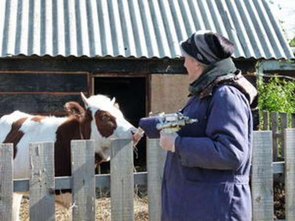 Ветеринарные специалисты обследуют телят