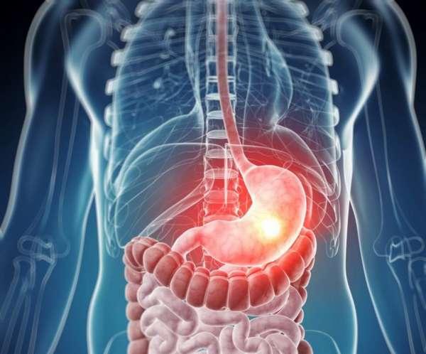 Желудочно - кишечный тракт