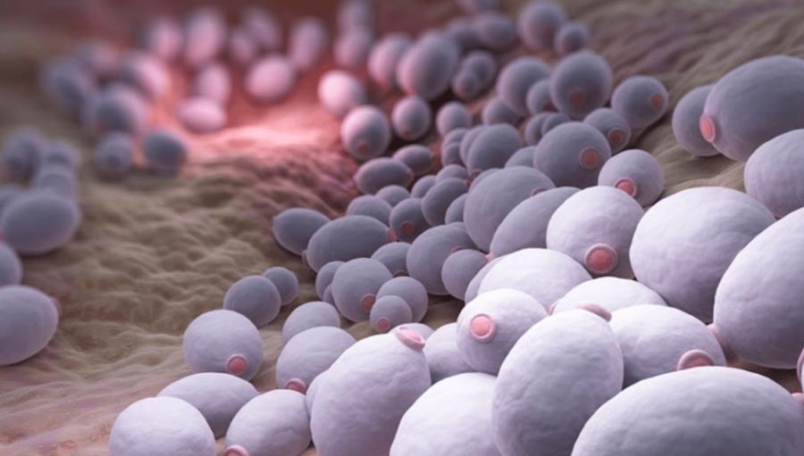 Грибковая инфекция внутри организма