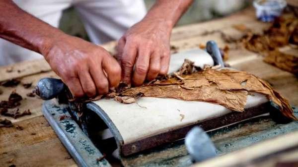 Обработка табачных листьев