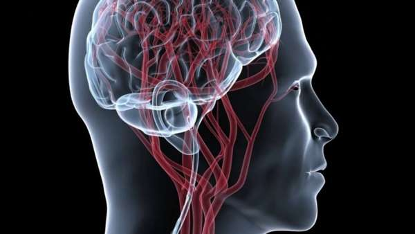 Кровеносные сосуды в мозге