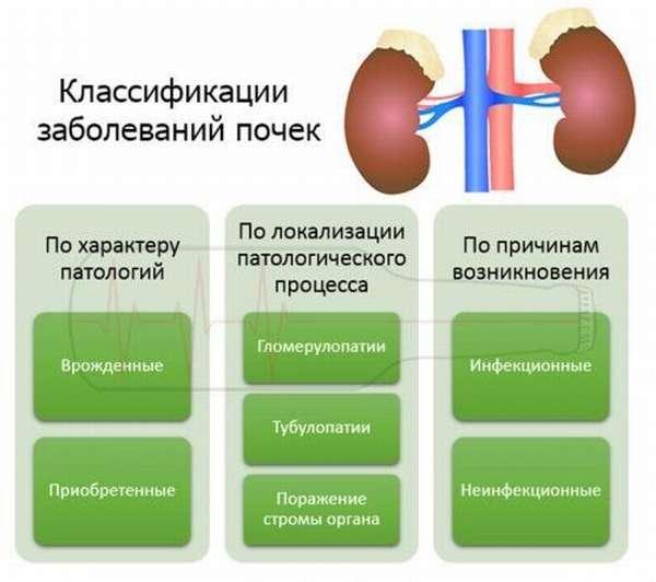 Классификации заболеваний почек