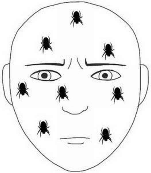Схема ползающих по лицу насекомых