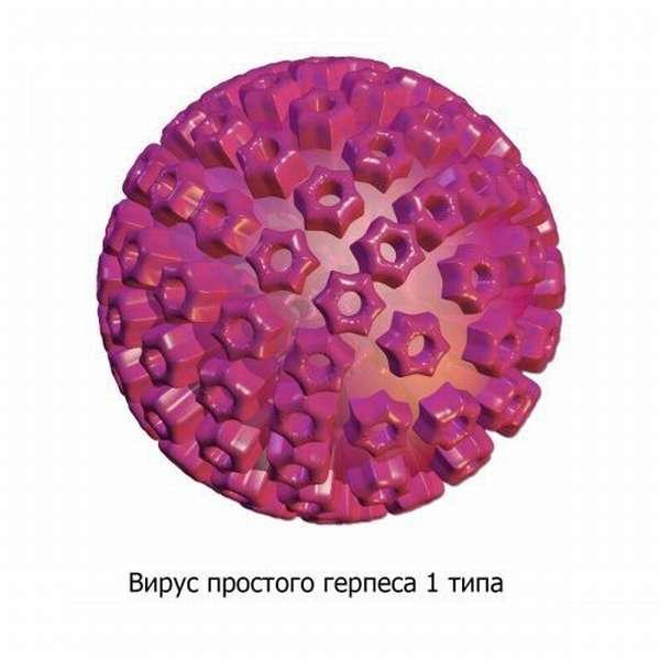 Герпес тип 1