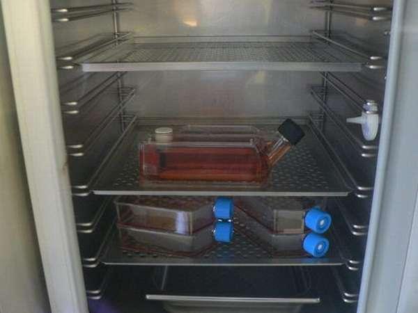 Лабораторный холодильник