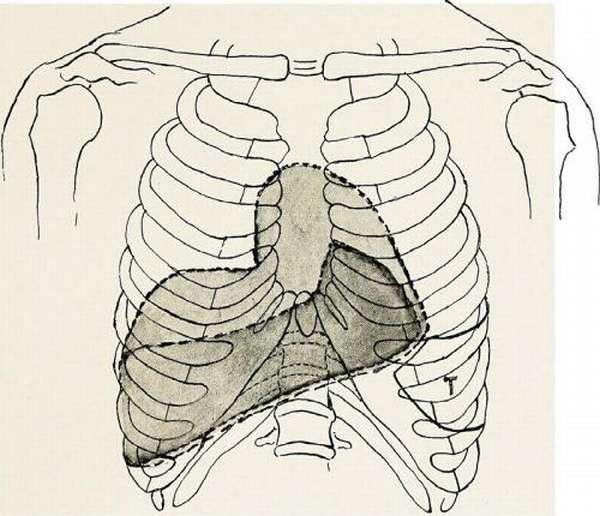 Исследование размера органа