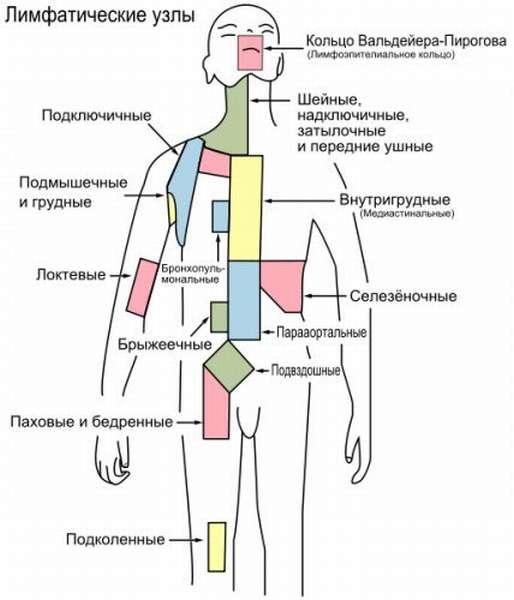Лимфоузлы в организме