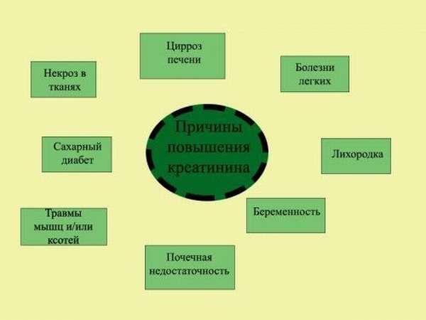 Схема повышения креатинина
