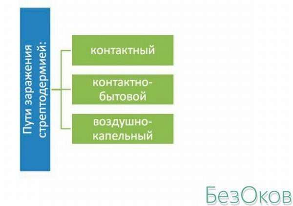 Пути заражения стрептококковой инфекцией