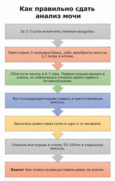 Этапы сдачи анализа мочи