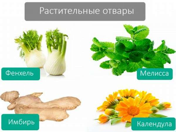 Растительные отвары