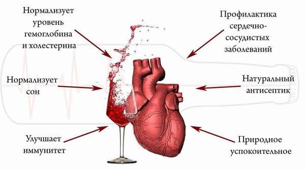 Как вино влияет на сердце
